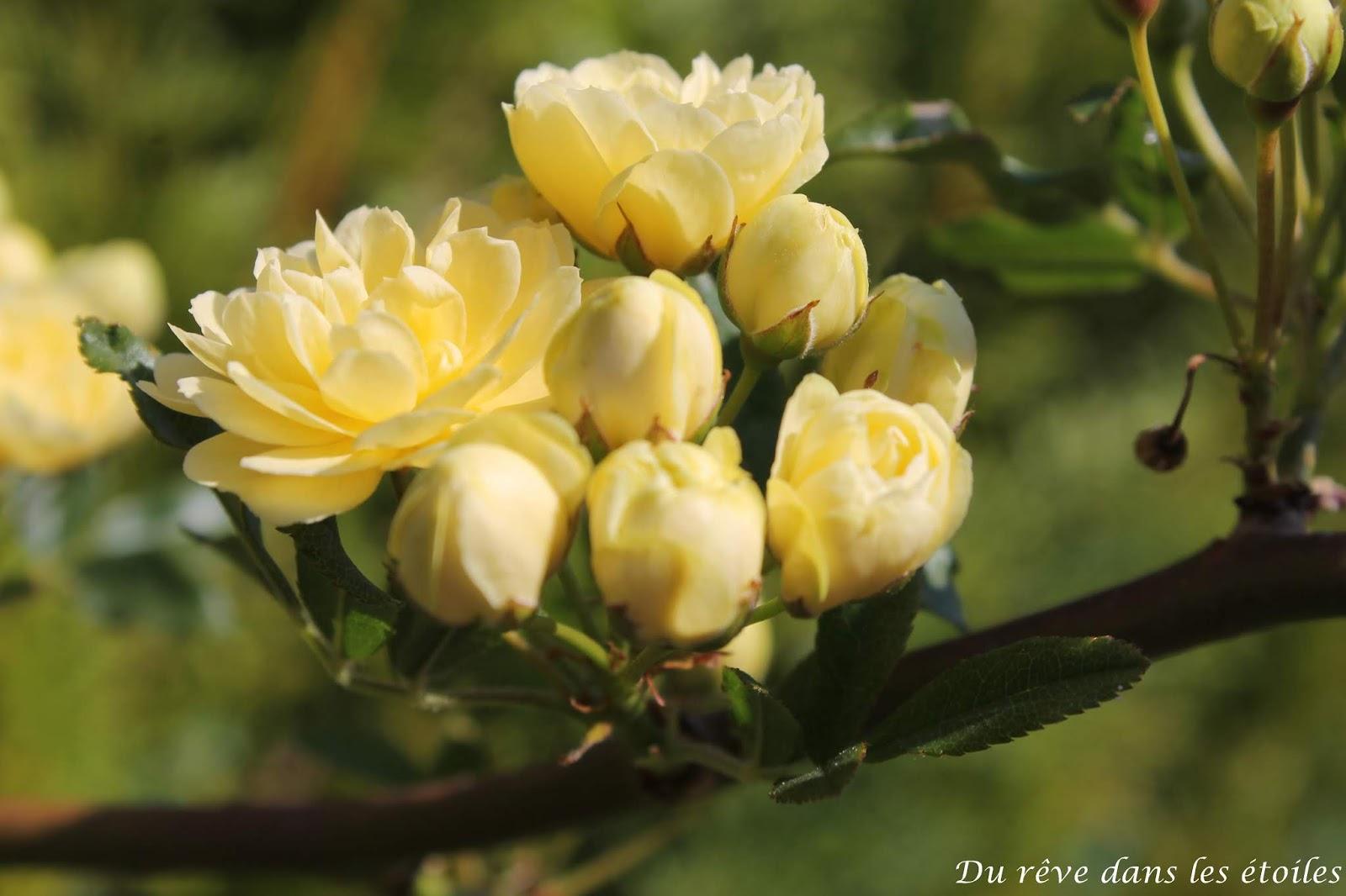 Promenade Photographique - les fleurs printanières