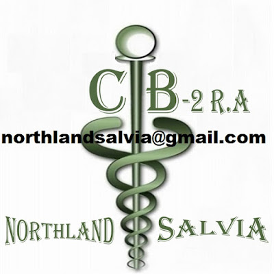 Image result for buy salvia nz