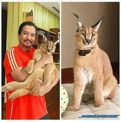 Kucing Eksotik Sultan Mizan Jadi Tumpuan Netizen. Nak Tahu Berapa Harganya?
