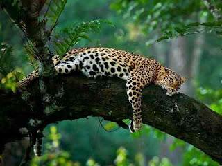 सपने में जानवरों देखना sapne mein animals dekhna