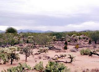 tumbuhan yang hidup digurun contoh kastus, Ekosistem Darat Dan 6 Bioma