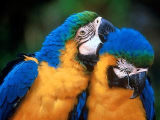 Francisco Rodríguez Criado, textamentos 2011, loros, aves, pájaros, artículos, prensa, artículo de prensa,