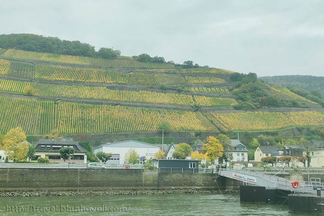 Views from Rhine Cruises