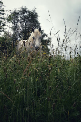 white horse in the grass