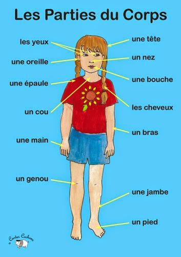 Części ciała - słownictwo 3 - Francuski przy kawie