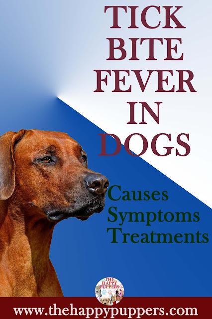 Tick bite fever in dogs