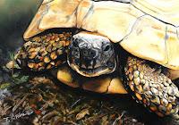 http://flora-victoire-artiste-peintre.blogspot.com/2013/07/animaux-autres.html