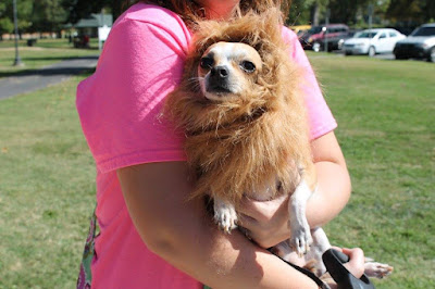Pup dressed as Lion-CarmaPoodale.com