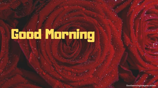 Good Morning Images In Roses 3