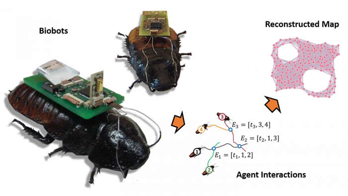 Insect Biobots Spying On Diaster Areas