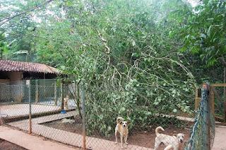 Urgente – GPA lança campanha SOS para recuperar canis e gatis afetados com o vendaval
