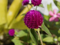 10 traditional medicinal plants part 2