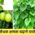 रोग प्रतिरोधक क्षमता  बढ़ाने वाले पांच पौधे