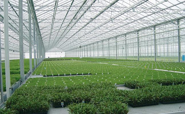 زراعة الخضروات في البيوت المحمية