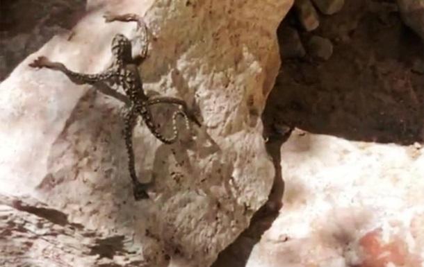 Американка знайшла істоту зі схожими на руки людини кінцівками
