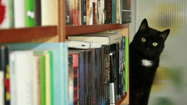cb 8 - 10 Gatos pretos lendo livros