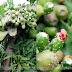 Higo - opuncja figowa czyli owoc kaktusu