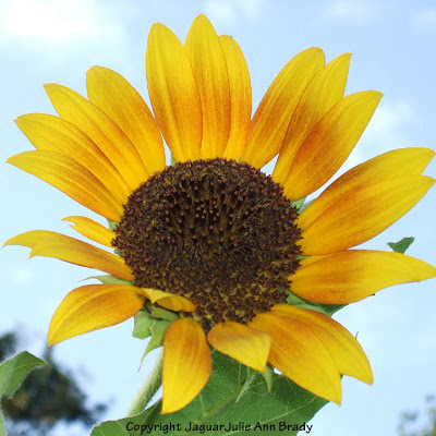 Another Inspiring Sunny Solitary Yellow Sunflower Blossom