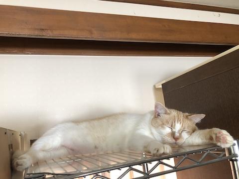 仏壇の上の猫