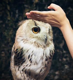 Cara Memelihara Burung