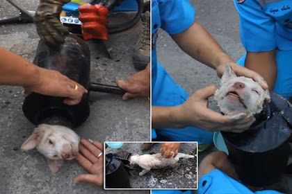 Te.rri.fied Puppy Lies Helpless While Rescuers Try To Cut Pipe Around His Neck And Body