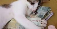 """Η τσιγκούνα γάτα που δεν αφήνει κανέναν να αγγίξει «τα χρήματα της» και έχει γίνει """"φίρμα"""" στο διαδίκτυο"""