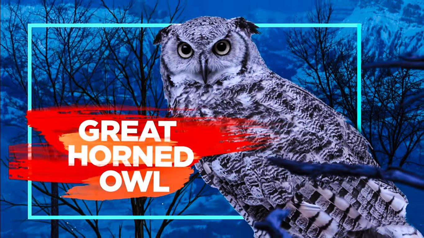 Top Ten Most Dangerous Birds on Earth - Factozone blog ...