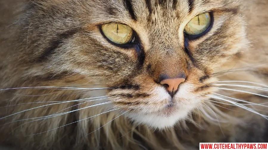 is cat hair harmful and dangerous?