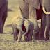 El elefante fue asesinado para extraerle los colmillos. Así podemos parar esta masacre