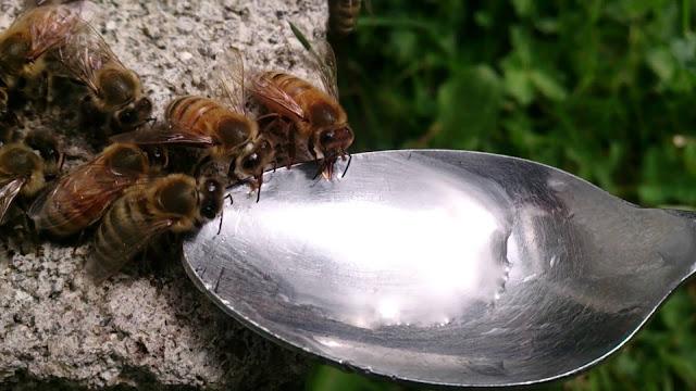 Η καλή οργάνωση του μελισσοκομείου μας και η σωστή χρήση της ζάχαρης