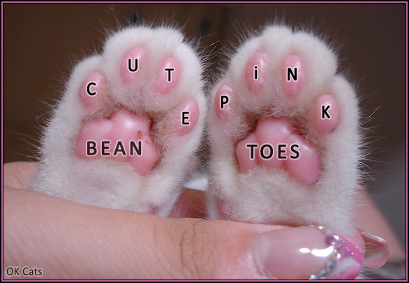Photoshopped Cat picture • Aww Cute pink bean toes. Cat paws are so beautiful and adorable [cat-gifs.com]