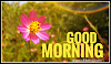 118+ Top Good Morning Status and Quotes [2020] for WhatsApp, Facebook and Instagram in English
