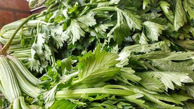 manfaat daun seledri untuk kesehatan rambut