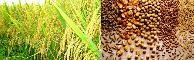 www.goldenmark.org - nhiều cơ hội lớn cho ngành xuất khẩu nông sản Việt Nam hướng tới các thị trường quốc tế.