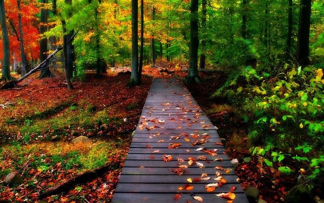 नेचर फोटो डाउनलोड, nature photo download