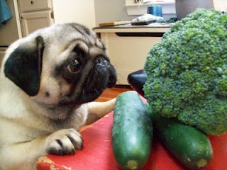 pug eating broccoli health and beauty by keppi what is osteoporosis 535