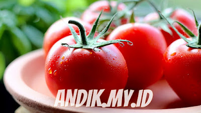 tomat, buah tomat, manfaat tomat, khasiat tomat, gizi tomat,