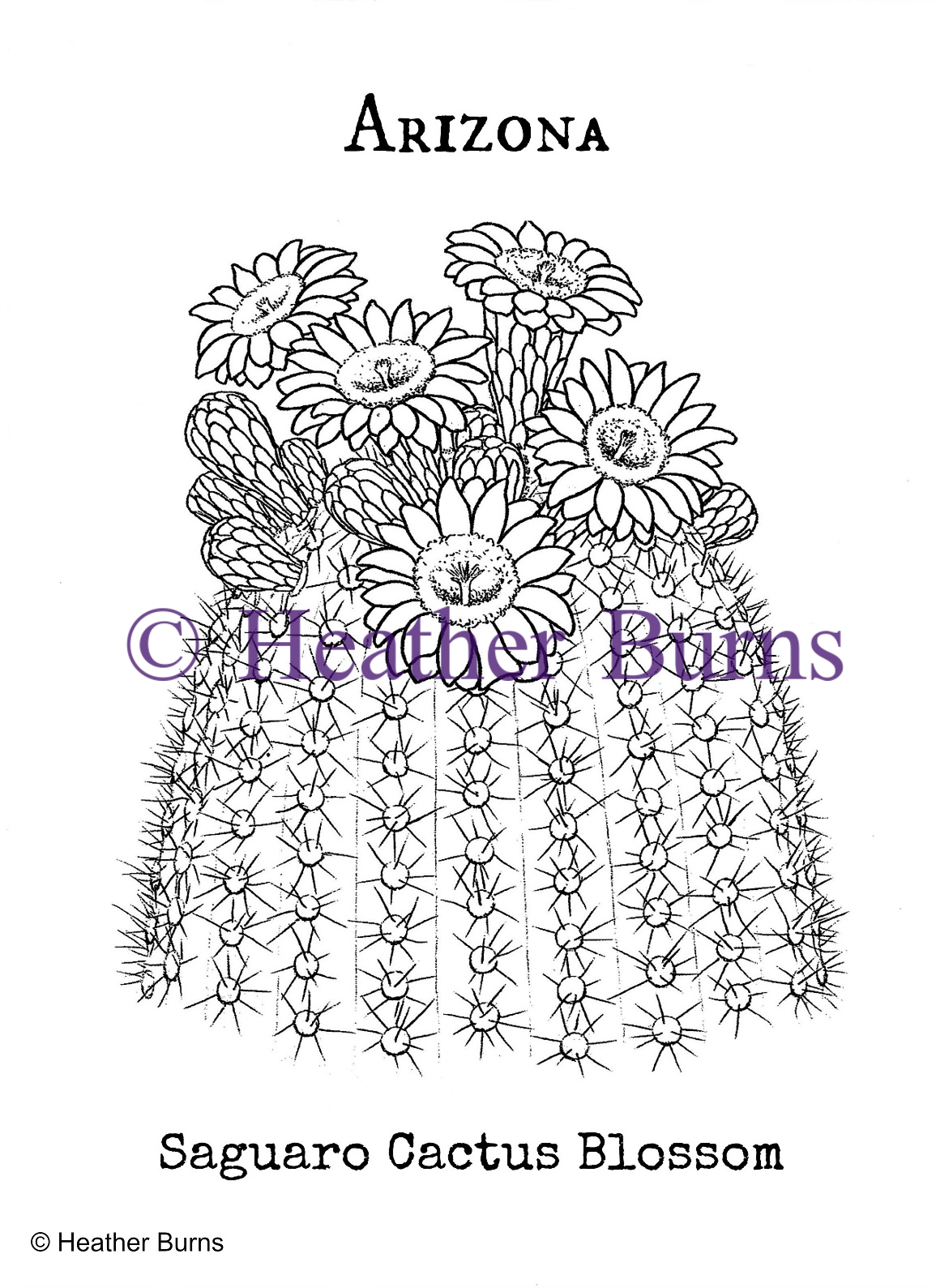 State Flower Coloring Book: Arizona Saguaro Cactus Blossom Coloring Page