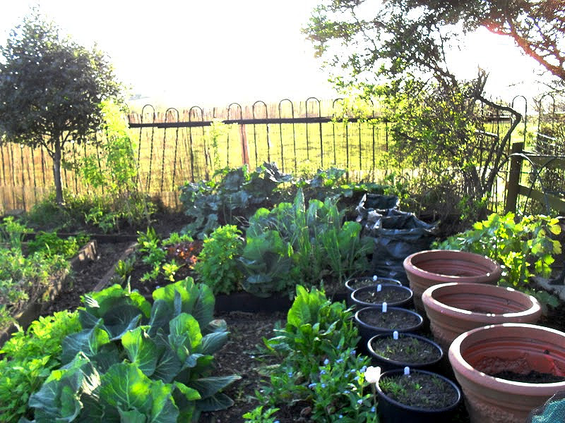 Ideas for Gardening on a Budget - Lovely Greens on Garden Design Ideas On A Budget  id=55499