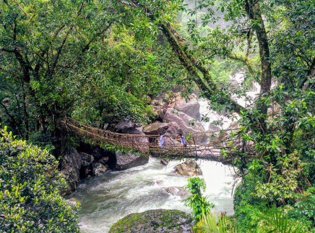 The longest living root bridge at Nongthymmai village, Meghalaya