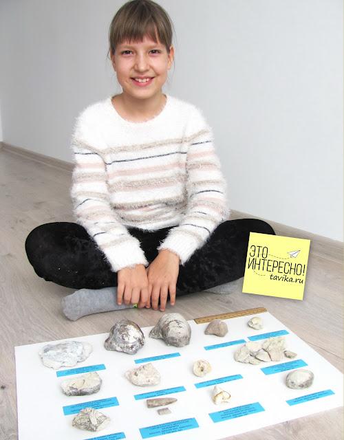 коллекция окаменелостей Крыма