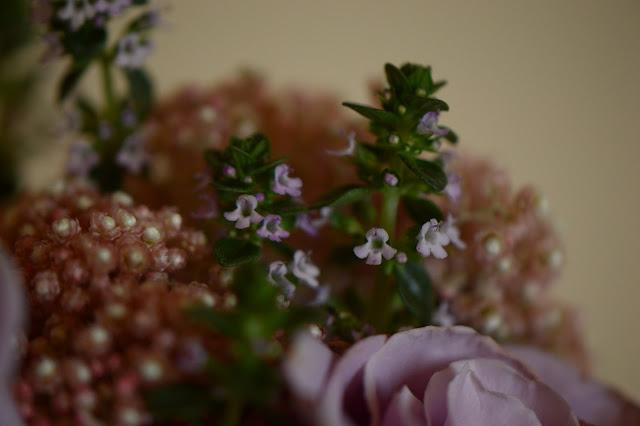 ozothamnus diosmifolius, lemon thyme, thymus, citriodora, monday vase meme, small sunny garden, desert garden, amy myers