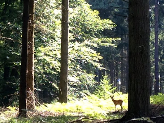 12 interesting facts about the New Forest in a Tweet