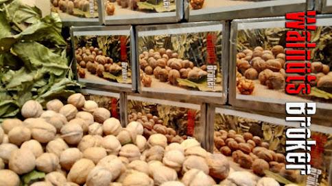 Выращивание саженцев из семян орехов Кочерженко от Walnuts Broker