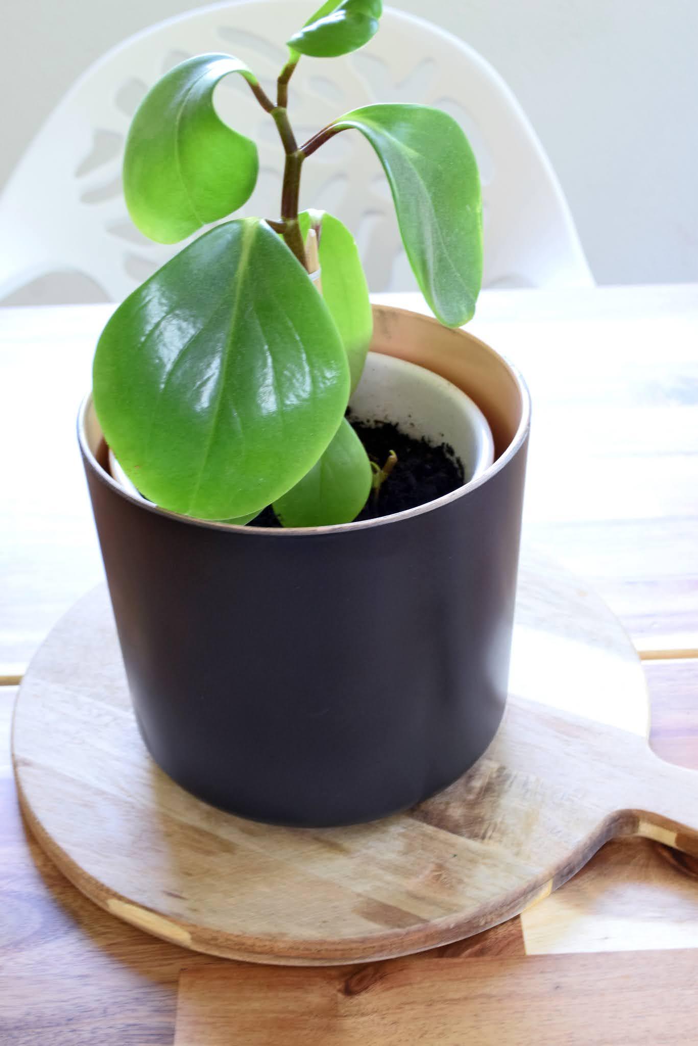 czarna matowa doniczka ceramiczna