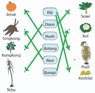 gambar ke nama bagian tanaman yang biasa dimakan www.jokowidodo-marufamin.com