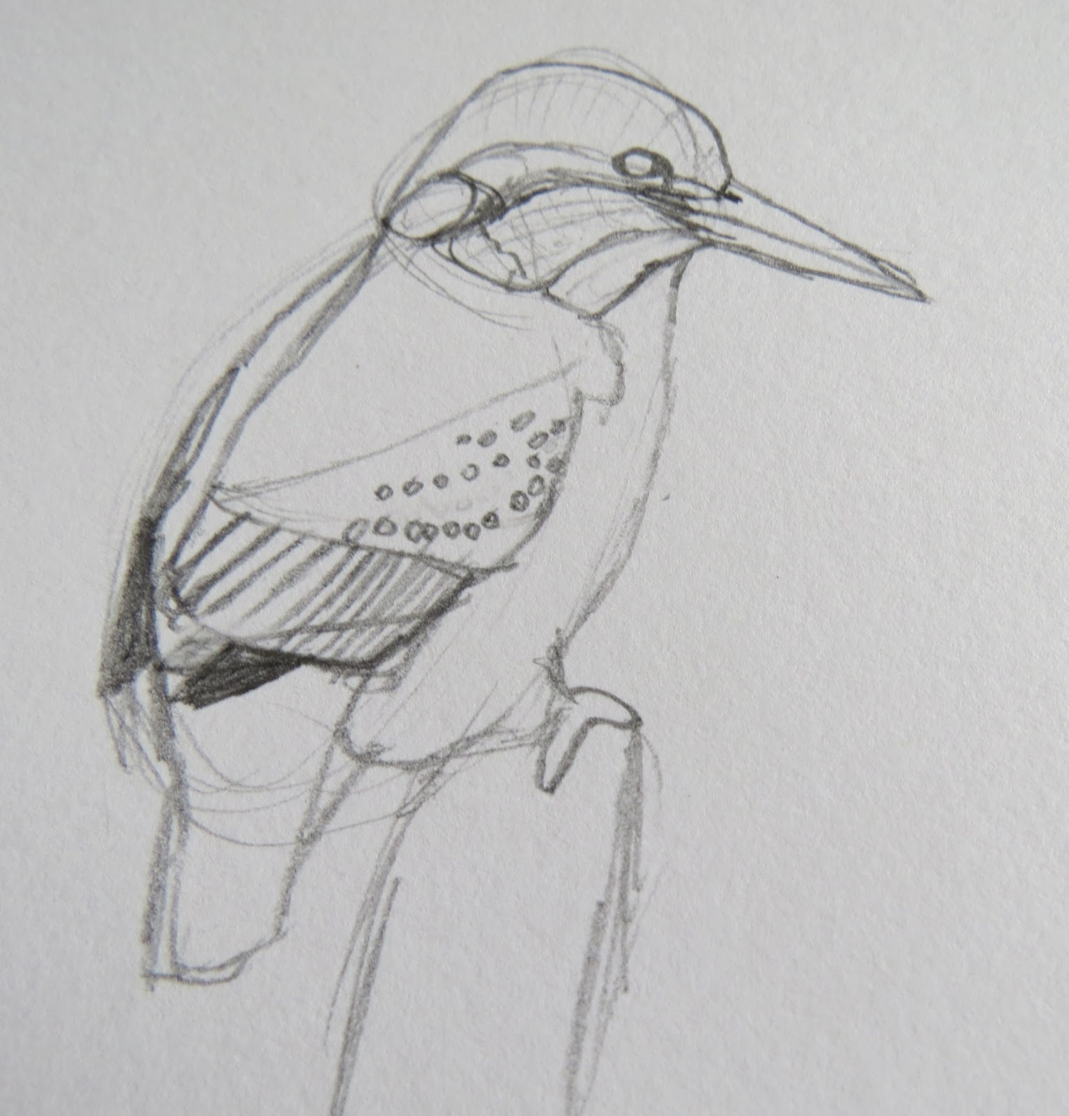 The Autistic Naturalist How To Draw Kingfishers