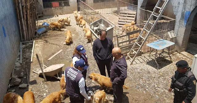 Rescatan a 33 perros de criadero clandestino en Iztapalapa