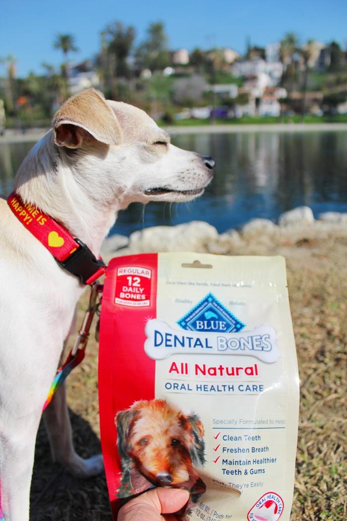 happyhazel: Celebrating National Pet Dental Health Month ...