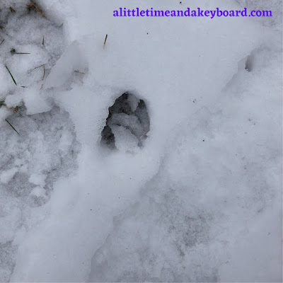 Deer tracks discovered in the snow.